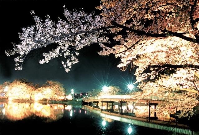 【臥竜公園 さくらまつり】   今年も臥竜公園のお花見イベントがやって参りました!  臥竜公園の桜並木は『さくら名所100選』にも選ばれております 公園全体でなんと約600本の桜が楽しめます   期間:4月4日(火)~24日(月) 見頃の期間内には夜桜のライトアップも御座います   当ホテルからお車で40分